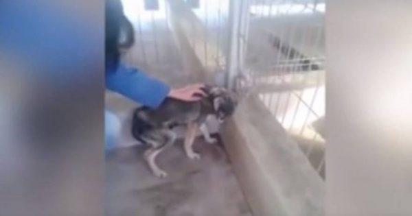Έτσι αναρρώνει ένα σκυλί που έχει υποστεί κακοποίηση (βίντεο)