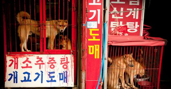 Κλείνει επιτέλους μια από τις μεγαλύτερες αγορές κρέατος από σκύλους στη Νότια Κορέα
