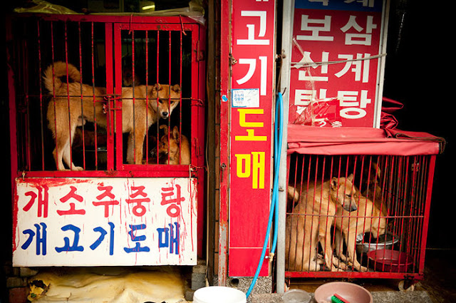 dog-meat-market-shut-down-south-korea-4