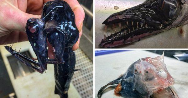 Τα ανατριχιαστικά πλάσματα που πιάστηκαν στα δίχτυα