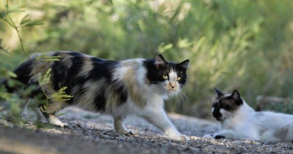 Έτσι θα βοηθήσεις τις αδέσποτες γάτες να προστατευτούν από το κρύο