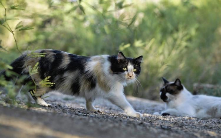 φροντίδα αδέσποτες γάτες