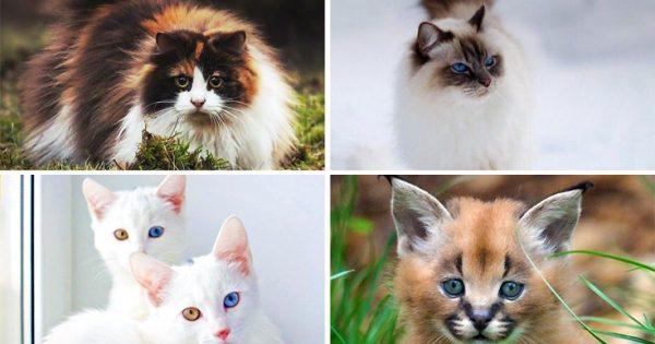 Όμορφες και… άσχημες γάτες που κοστίζουν μια περιουσία