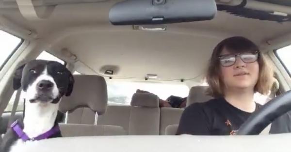 Ήταν στο αυτοκίνητο με τον σκύλο της όταν άκουσε το Αγαπημένο της τραγούδι στο ράδιο. Προσέξτε τώρα τι θα κάνει ο σκύλος!