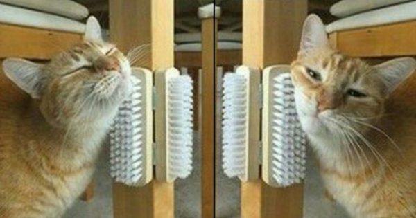 Μήπως η γάτα σας βαριέται απίστευτα; Αν ναι, δείτε 10 μοναδικά DIY κόλπα για να την κάνετε ευτυχισμένη!