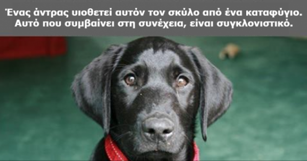 Ήθελε να επιστρέψει τον σκύλο του στο καταφύγιο όταν διάβασε το γράμμα του προηγούμενου ιδιοκτήτη. Αυτό που έγραφε, άλλαξε τα πάντα!