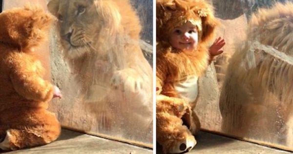 Ένα μωρό συναντάει τον βασιλιά των ζώων (βίντεο)