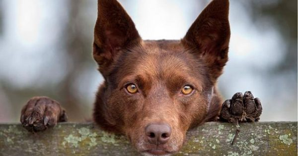 Γιατί οι σκύλοι τρώνε… πέτρες;