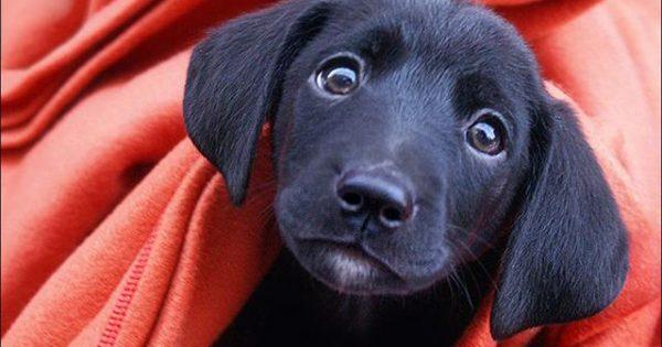 Πως να διαλέξετε όνομα για τον σκύλο σας και πως θα το αγαπήσει