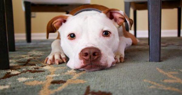 Άστεγοι και σκύλοι – Ένα δέσιμο ιδιαίτερο, βαθύ, μια αγάπη δυνατή και αμοιβαία