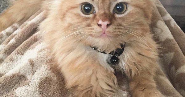 Αυτό το γατάκι από τη μέρα που υιοθετήθηκε δεν σταμάτησε να χαμογελά!