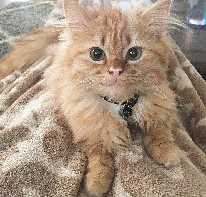υιοθεσία αδέσποτων γατάκι