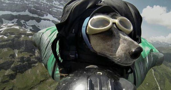 Ο πρώτος σκύλος που κάνει Base jumping (βίντεο)