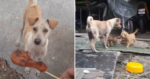 Όταν είδε ότι η πεινασμένη σκυλίτσα πήρε μαζί το φαγητό της αποφάσισε να την ακολουθήσει. Αυτό που αντίκρισε τον έκανε να δακρύσει!