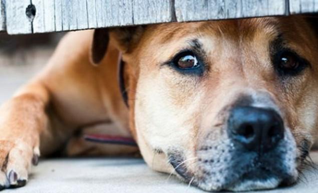 κακοποίηση σκύλων