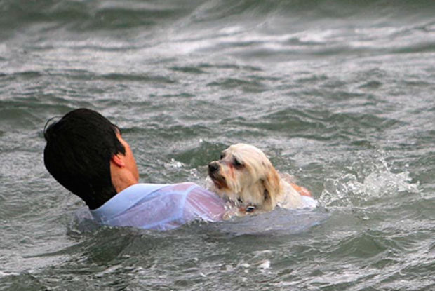 sue-drummond-shih-tzu-bibi-being-rescued-by-raden-soemawinata-in-melbourne-05-620x415