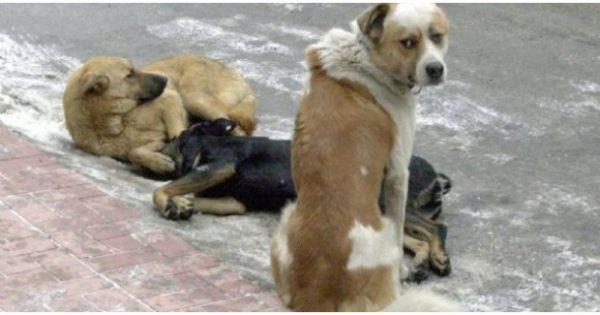 Βίντεο: Αντιμετώπιση φόλας σε σκύλους και γάτες
