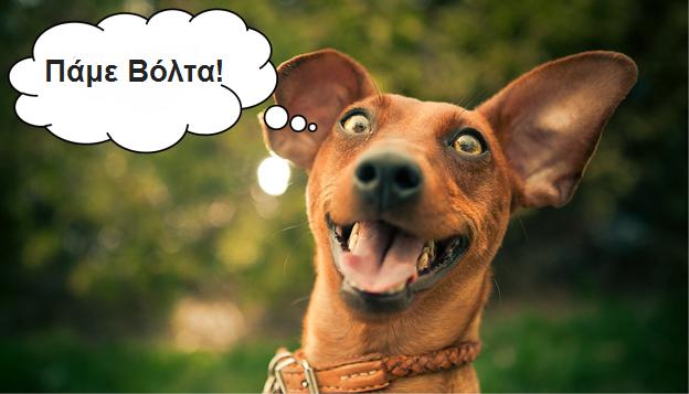 yay-happy-dog