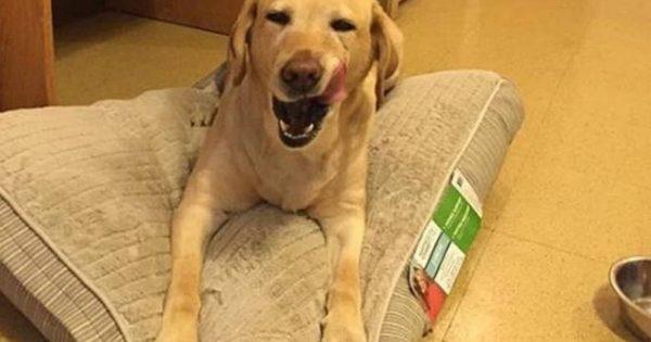 Σκύλος κάλεσε την πυροσβεστική πριν τελικά σώσει ο ίδιος την ιδιοκτήτριά του!