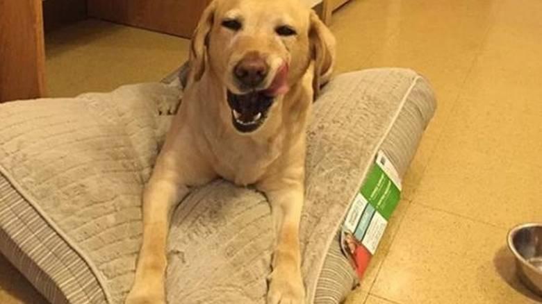 Σκύλος πυροσβεστική