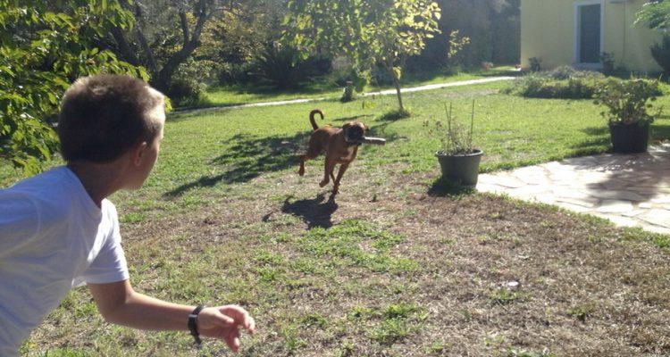 σκύλος και παιδί Σκύλος παιδί