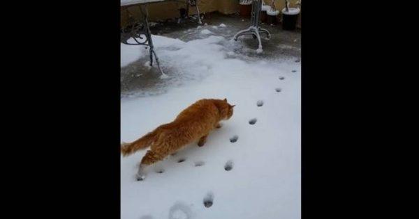 Γάτα στη Λέσβο βλέπει για πρώτη φορά χιόνι στη ζωή της! (βίντεο)