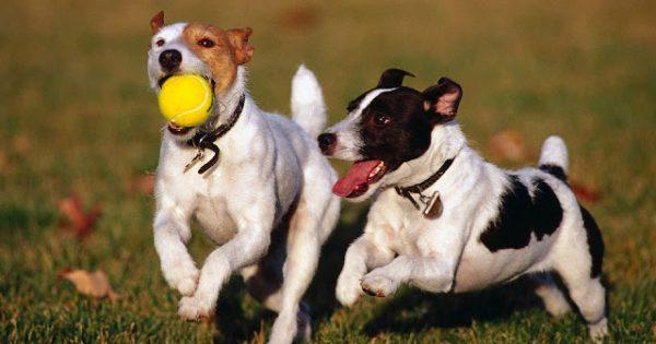 10 μυστικά που δεν σας λέει το σκυλί σας – και πρέπει να ξέρετε!