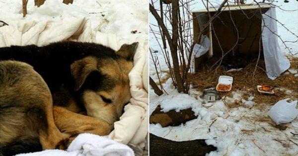 Μία γυναίκα κοιμόταν μέσα στο κρύο σε μία χάρτινη κούτα. Δείτε τι έκανε ένας άγριος σκύλος…