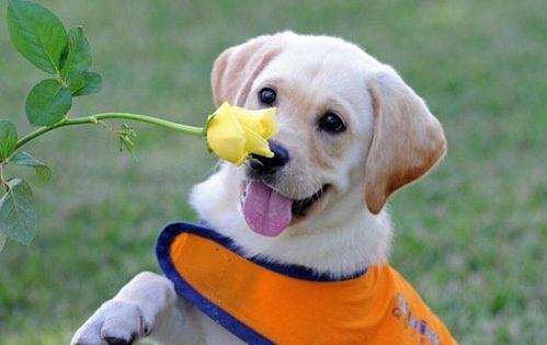 Πώς ένας σκύλος μπορεί να σώσει τη ζωή σας;