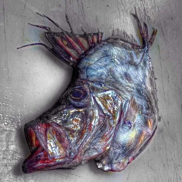 θαλάσσια πλάσματα