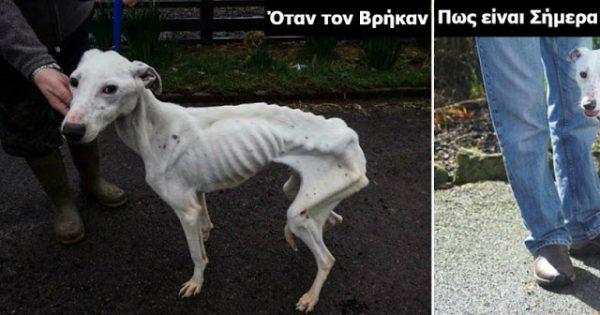 Όταν τον βρήκαν ζύγιζε μόλις 10 κιλά και κινδύνευε να πεθάνει. Μόλις δείτε πως είναι σήμερα, δεν θα το πιστεύετε!