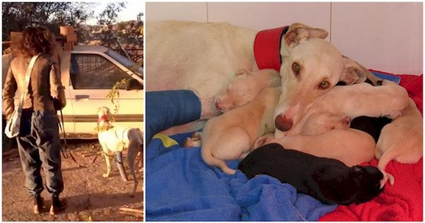ΘΑ ΔΑΚΡΥΣΕΤΕ: Πεινασμένη σκυλίτσα με σπασμένο πόδι περπατάει χιλιόμετρα για να οδηγήσει τους ανθρώπους στα κουταβάκια της