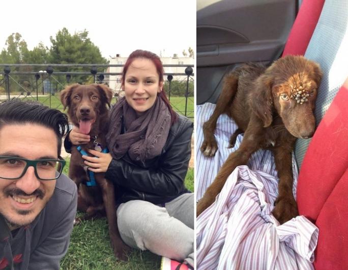 υιοθεσία αδέσποτων τσιμπούρια Σκύλος