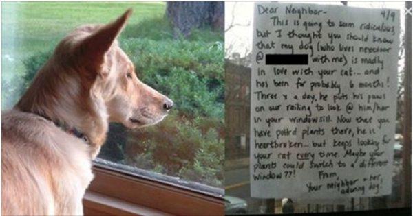 Ο σκύλος του κοιτούσε καθημερινά για ώρες απορροφημένος έξω από το παράθυρο, τότε έγραψε στον γείτονα του το κατάλληλο σημείωμα που έλυνε το «μυστήριο»