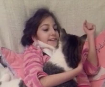 καταφύγιο ζώων Γάτα