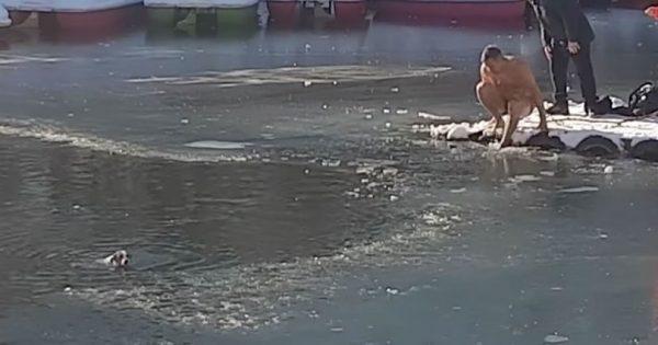 Απελπισμένος σκύλος παλεύει για τη ζωή του στα νερά μιας παγωμένης λίμνης. Τότε ένας γενναίος άνδρας βουτάει στο παγωμένο νερό και τολμάει το απίστευτο.