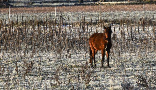 Τρίπολη: Viral οι φωτογραφίες με το άλογο που βρέθηκε δεμένο στα χιόνια
