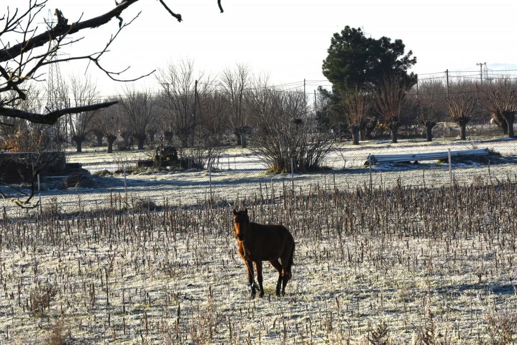 χιόνια Τρίπολη άλογο