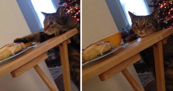 """Έπιασε την γάτα της """"στα πράσα"""" ενώ έκλεβε φαγητό. Η αντίδρασή της; Έχει ξετρελάνει ΟΛΟ το διαδίκτυο!"""