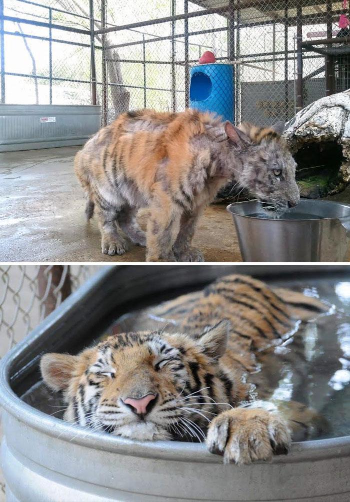 διάσωση ζώων
