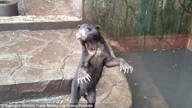 ζωολογικός κήπος Βίντεο αρκουδάκια