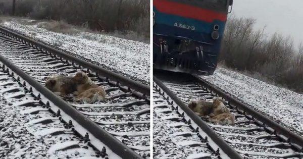Ηρωικός σκύλος έμεινε δυο μέρες σε μια παγωμένη σιδηροδρομική γραμμή προσπαθώντας να σώσει την τραυματισμένη φίλη του