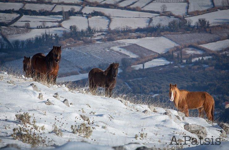 Βίντεο άλογα άγρια άλογα