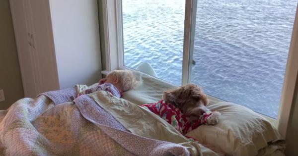 Το Μικρό Αγόρι και Σκύλος του κοιμόντουσαν στο ίδιο Κρεβάτι. Αυτό που ακολούθησε μόλις Ξύπνησαν; Θα σας Φτιάξει τη Μέρα!