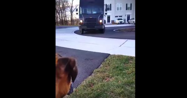 Σκύλος περιμένει ανυπόμονα τον αγαπημένο του Οδηγό. Προσέξτε τώρα την αντίδρασή του όταν το Φορτηγό σταματά μπροστά στο Σπίτι!