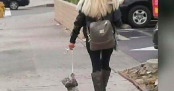 ΦΡΙΚΗ: Έδεσε με ένα Λουρί τον Γάτο της και τον έσερνε μέσα στον Δρόμο. Η συνέχεια θα σας Κάνει να Ανατριχιάσετε!