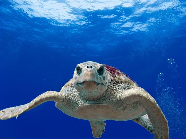 θαλάσσιες χελώνες γήρανση αχιβάδες αστακοί