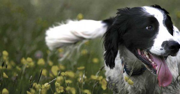 Πότε και γιατί γαβγίζουν οι σκύλοι;
