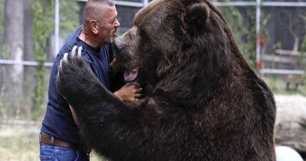Ο Jimbo είναι ο πιο γλυκός αρκούδος που έχουμε δει! (εικόνες, βίντεο)