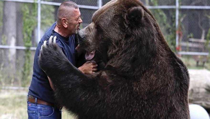 Βίντεο αρκούδος